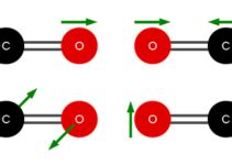 Difference between mitosis and meiosis essay
